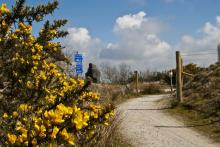 eden to Bugle trail showing gorse